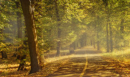 Sunny day in autumn park. Royalty Free Stock Photography