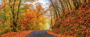 Sunny day in autumn Royalty Free Stock Photo