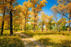 Sunny Day In Autumn Sunny Forest Trees, Green Stock Image