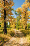 Sunny Day In Autumn Sunny Forest Trees, Green Royalty Free Stock Image