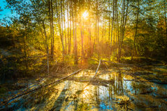 Sunny Day In Autumn Sunny Forest Trees. Nature Stock Photo