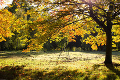 Sunny day in autumn Stock Image