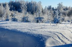 Many tracks of forest animals in the meadow near the forest. Sunny day, beautiful winter view of the snowy forest; many tracks of forest animals in the meadow royalty free stock images