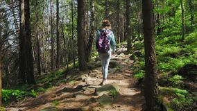 On a sunny day, beautiful young tourist girl, with a backpack, fashion woman, walks through the forest, the background. Of trees. Concept: overcoming stock video footage