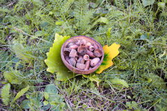 Sunny day in city park in autumn. Composition of acorns. Royalty Free Stock Photography