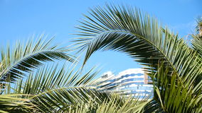 Sunny day. Close up of tropical palms leaves. Slow motion stock footage