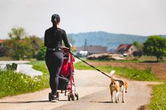 Sunny day in countryside. Mother with Child and Beagle dog walking away stock photo