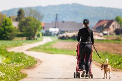 Sunny day in countryside. Mother with Child and Beagle dog walking away stock images