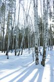 Sunny Day in de Bomenbos van de de Winterberk stock afbeelding