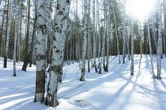 Sunny Day in de Bomenbos van de de Winterberk stock foto