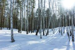 Sunny Day in de Bomenbos van de de Winterberk stock foto's