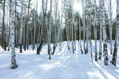 Sunny Day in de Bomenbos van de de Winterberk royalty-vrije stock afbeelding