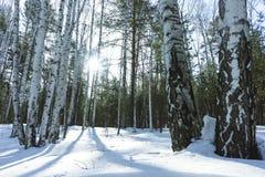 Sunny Day in de Bomenbos van de de Winterberk royalty-vrije stock foto