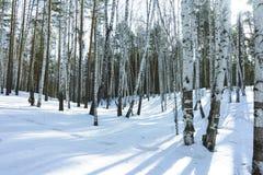Sunny Day in de Bomenbos van de de Winterberk royalty-vrije stock foto's