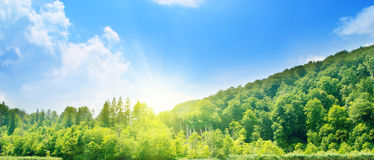 Sunny day in deep forest Stock Photography
