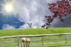 Sunny Day Dish Royalty Free Stock Photo