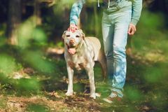 Sunny day with dog in forest Royalty Free Stock Images