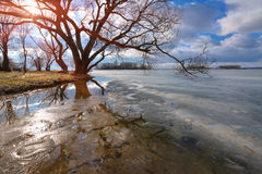 On a Sunny day in early spring on the lake. Melting ice on the lake surface. The tree bent over the water and reflected. Blue sky Royalty Free Stock Photography