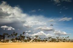 Sunny Day en la playa con las palmeras, Fotografía de archivo libre de regalías
