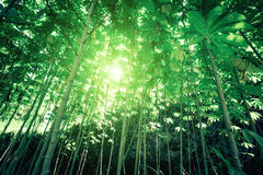 Sunny day in fantasy tropical forest Royalty Free Stock Image