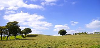 Sunny Day Field Immagini Stock