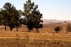 Sunny Day Field fotografía de archivo