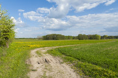 Sunny day in the field, gravel road through the meadow, sunny we Royalty Free Stock Photos