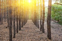 Sunny day in a forest Royalty Free Stock Photography
