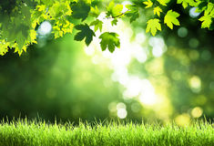 Sunny day in forest. With green leaves Royalty Free Stock Images