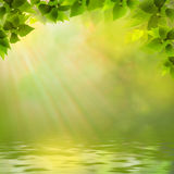 Sunny day on the forest lake. Abstract natural backgrounds Stock Images
