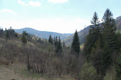 Sunny day in the forest. Sunny morning in the Carpathian mountains stock photos