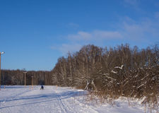 Sunny day in the forest and skiers Stock Images