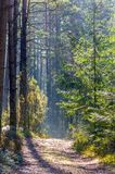 Sunny day in forest. Nature landscape of Lithuanian forest Royalty Free Stock Images