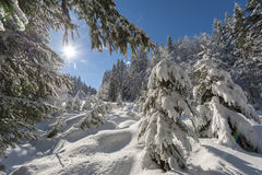 Sunny day after fresh snowfall in the forest.  Royalty Free Stock Images