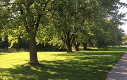 Sunny day, green leaves, juicy grass. Trees stand row. Road city Park. Beautiful nature in forest, Sunny day, green leaves, juicy grass. Trees stand row Stock Photography