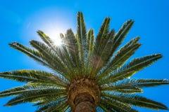Sunny Day i Los Angeles Palmträd och solstråle Arkivfoto