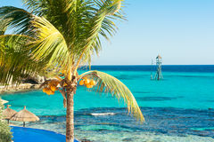 Sunny day on Isla Mujeres, Mexico. View with palm tree and coconuts in the front Stock Photography