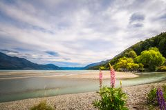 Sunny day at Kinloch Wharf in New Zealand. Sunny aspect of the Mountain range and Lake Wakatipu at Kinloch Wharf, with the rocky banks of Dart river and pink Royalty Free Stock Photo