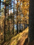 Karelian pines on lake Saimaa. Sunny day on lake Saimaa in Finland Fresh air and silence royalty free stock photo