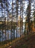 Karelian pines on lake Saimaa. Sunny day on lake Saimaa in Finland Fresh air and silence royalty free stock images