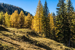 Sunny Day in the Limestone Alps Royalty Free Stock Photos