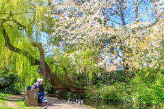 Sunny Day at London New River Walk, Canonbury. London, UK - April 28, 2016 - Two elderly gentlemen on a bench feeding pigeons next to the canal waterway at the royalty free stock image
