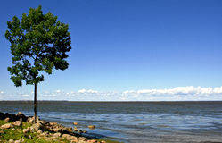 Sunny day. Lonely tree near big river Royalty Free Stock Images