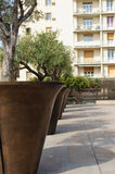 Sunny day in Marseille, France. Oversized olive tree pots near Hôtel de Ville in Marseille, France Royalty Free Stock Photo