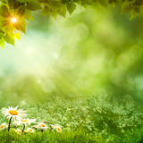Sunny day on the meadow. Environmental backgrounds Royalty Free Stock Photography