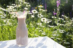 Sunny day in the meadow. Tasty breakfast in the flower garden. Bottle full of pink drink with strawberries. Delicious milkshake with strawberries.Glass bottle stock image