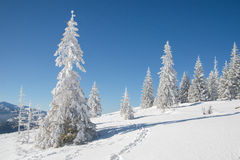 Sunny day in the mountains. Christmas tree covered with snow Stock Photography