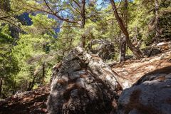 Sunny day in the mountains, in the pine forest. At the forefront there are large stones, further pine forest stock photography
