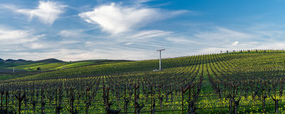 Sunny day in Napa Valley vineyard Stock Photography