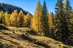 Sunny Day nelle alpi del calcare Fotografie Stock Libere da Diritti